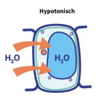 hypertonisch hypotonisch